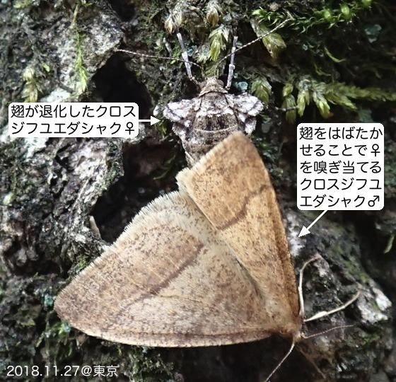 02黒筋冬枝尺ベアB