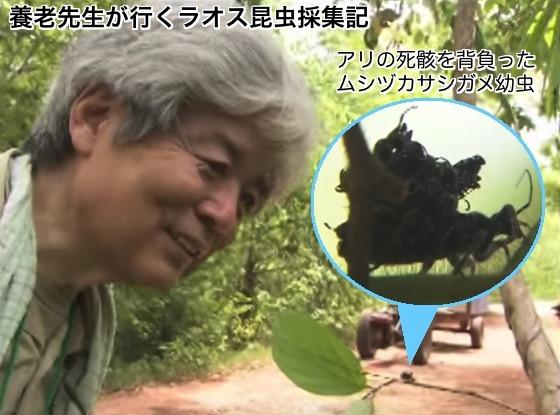 04ラオス虫塚刺亀DVD