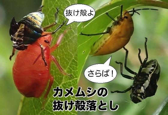 01亀虫抜殻落し一覧