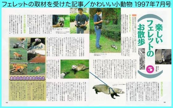 03かわ小Ferret散歩