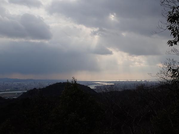 「光る木」観察会2日目