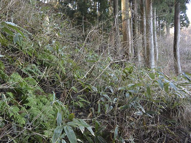 200224-006.jpg
