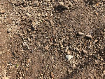 虫と草とボチボチ仕事3