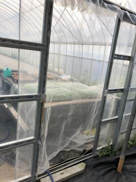 虫と草とボチボチ仕事4