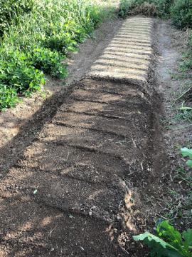 虫と草とボチボチ仕事6