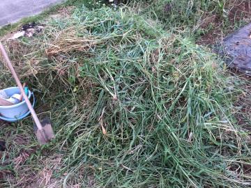 虫と草とボチボチ仕事10