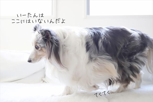 家庭犬技術向上