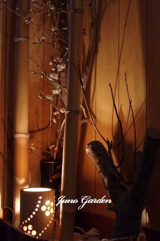 梅の木200214