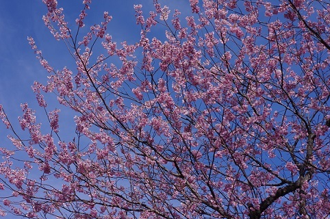 桜200307