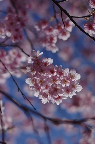 春200307