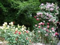 2019-06-23花巻温泉薔薇園193