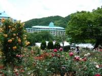 2019-06-23花巻温泉薔薇園196