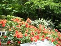 2019-06-23花巻温泉薔薇園199