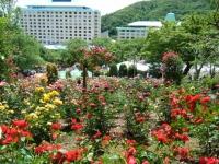 2019-06-23花巻温泉薔薇園203