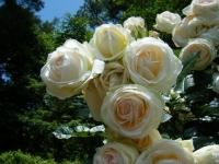 2019-06-23花巻温泉薔薇園208
