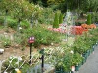 秋の花巻温泉街バラ園2019-09-28-55