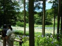 2019-07-13一関市舞川 紫陽花園204