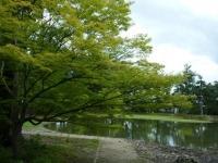 2019-07-01毛越寺あやめ祭り208