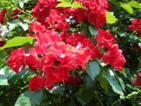 2019-06-23花巻温泉薔薇園219