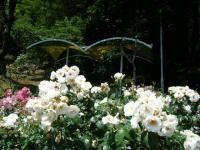 2019-06-23花巻温泉薔薇園224