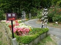 秋の花巻温泉街バラ園2019-09-28-63