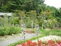 秋の花巻温泉街バラ園2019-09-28-64