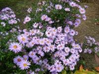 秋の花巻温泉街バラ園2019-09-28-71