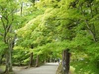 2019-07-01毛越寺あやめ祭り224