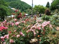 2019-06-23花巻温泉薔薇園231