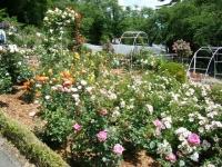 2019-06-23花巻温泉薔薇園236