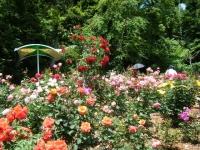 2019-06-23花巻温泉薔薇園239