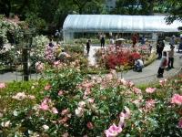 2019-06-23花巻温泉薔薇園240
