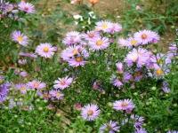 秋の花巻温泉街バラ園2019-09-28-73