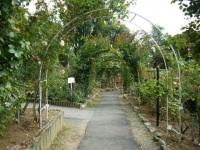 秋の花巻温泉街バラ園2019-09-28-78