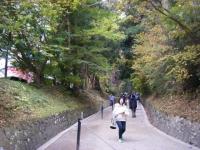 2019-11-09中尊寺菊祭り紅葉010