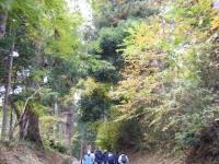 2019-11-09中尊寺菊祭り紅葉011