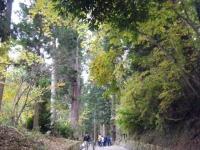 2019-11-09中尊寺菊祭り紅葉012