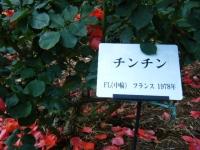 2019-06-23花巻温泉薔薇園245
