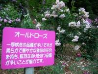 2019-06-23花巻温泉薔薇園251