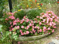 秋の花巻温泉街バラ園2019-09-28-96