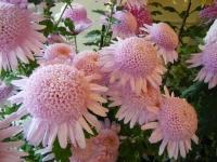 花と泉の公園2019-11-16-008