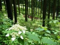 2019-07-13一関市舞川 紫陽花園237