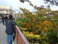 2019-10-26秋の厳美渓059