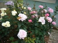 2019-06-23花巻温泉薔薇園264