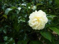 秋の花巻温泉街バラ園2019-09-28-110