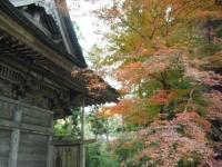 2019-11-09中尊寺菊祭り紅葉053