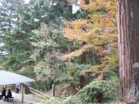2019-11-09中尊寺菊祭り紅葉055