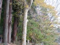 2019-11-09中尊寺菊祭り紅葉057