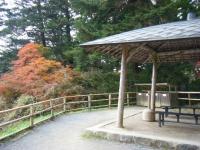 2019-11-09中尊寺菊祭り紅葉059