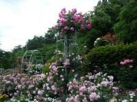 2019-06-23花巻温泉薔薇園278